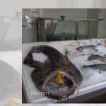 Риба на едро и дребно – Диана Сергеева 08 ЕООД | Нови Искър